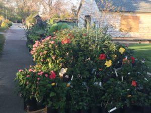 Plant sale flowers.
