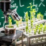 plant research 1
