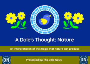 A Dales Thought Nature