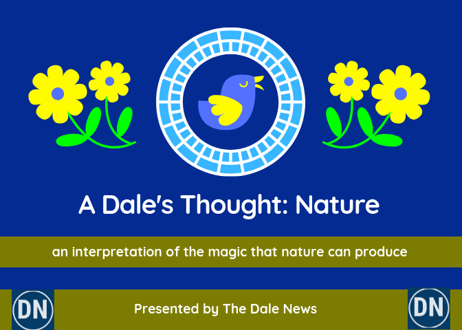 Image for A Dale's Thought: Nature.